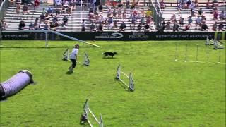 Large Dog Agility 3rd Place - Incredible Dog Challenge 2015 Boston, MA