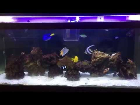 Black Fin Catfish Shark In Saltwater? Tank Update And More!!