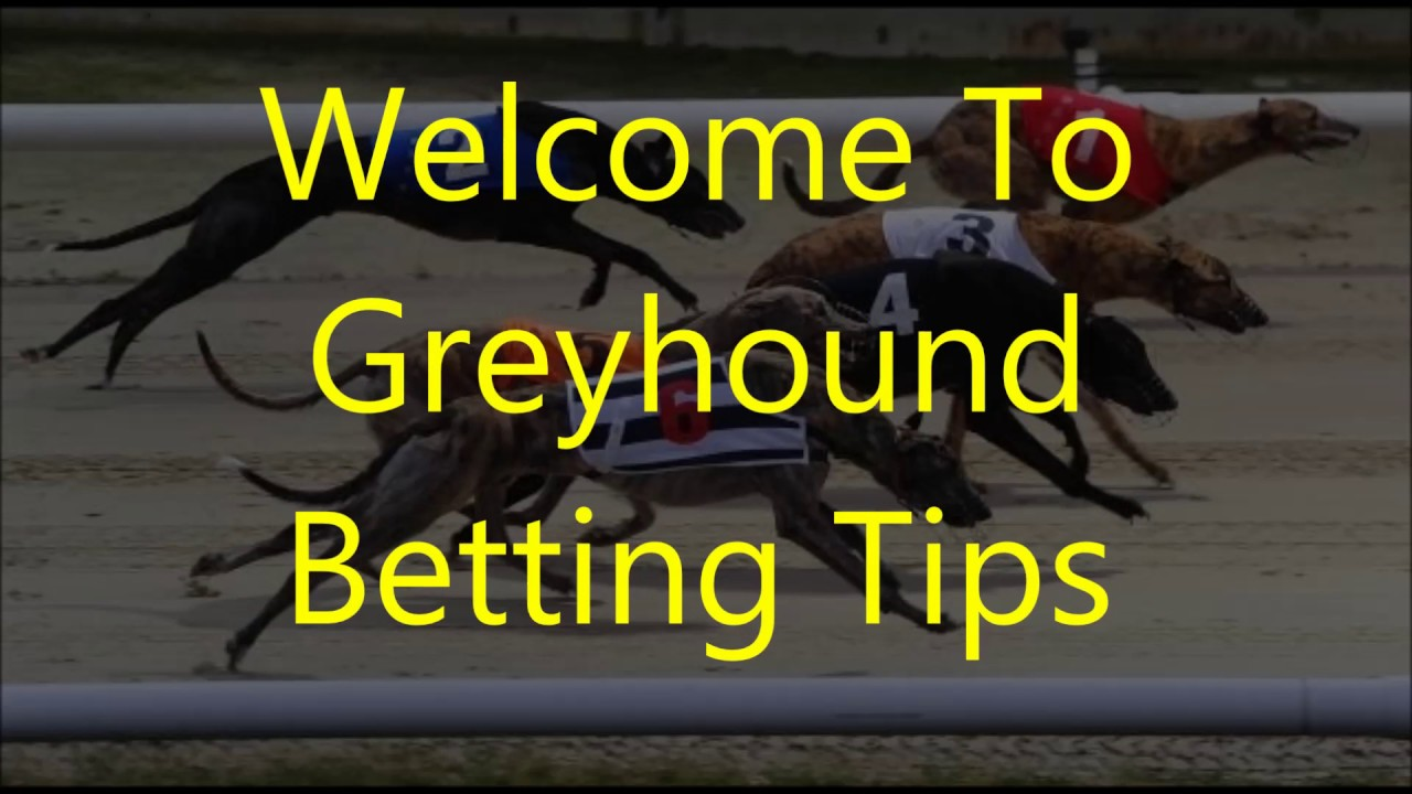 Greyhound racing betting rules of texas is soul man on betting