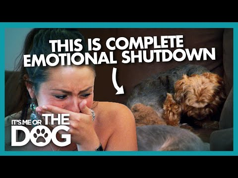 Dog in Distress Shuts Down Emotionally   It's Me or the Dog