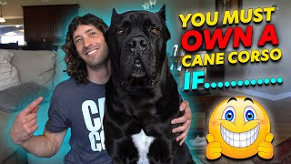 Why You MUST Own a Cane Corso