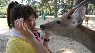 奈良公園で鹿の方々とちゅちゅちゅ‼︎ thumbnail