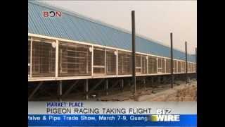 Pigeon racing taking flight - Biz Wire: Feb.27 - BONTV