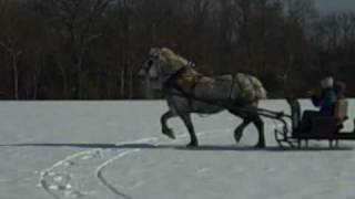 Winter Hill Farm One Horse Open Sleigh Ride With Chanel