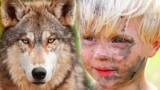 Мальчишка спас маленького волчонка! А когда волчонок подрос он отплатил ему добром. Волчья верность.