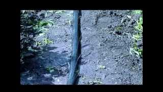 Капельный полив. Спрей-шланг туман.(, 2015-07-15T06:38:18.000Z)