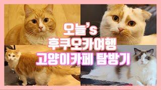 후쿠오카 고양이카페 / catcafe OBC / catcafe YOSHINEKO / catcafe COTA / 일본고양이카페 / 후쿠오카여행 / nekocafe / 猫カフェ