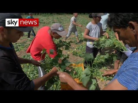 Brexit: Farmers warn of crops rotting in fields