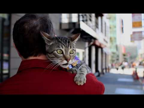 Jack the Traveling Cat | The City Exposed