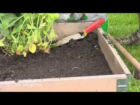 Comment planter la betterave jardinerie truffaut tv for Comment s occuper d un palmier
