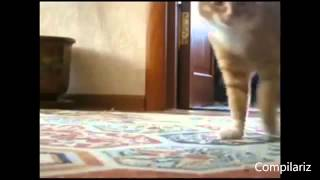 Кошачьи танцы  Очень прикольно! Обхахочешься!