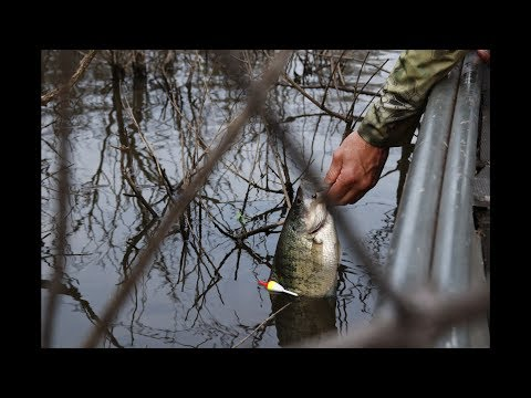 Fishing RARE Vegetation For Spawning CRAPPIE (LIVE MINNOW)