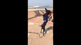 ジャンプが得意なミニピン! ミニチュアピンシャーディオブログ:http:/...