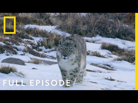 Mountains (Full Episode) | Hostile Planet