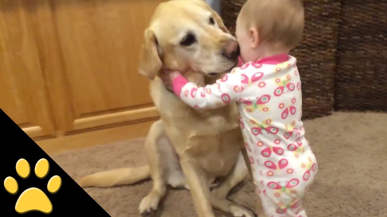 Youtube Dogs And Cats Protecting Babies