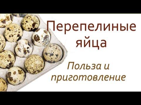 Как правильно употреблять перепелиные яйца для здоровья