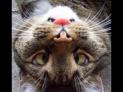 ПРИКОЛЫ с ЖИВОТНЫМИ! Видео приколы про животных до слез!