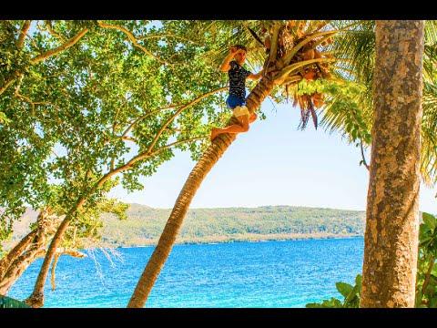 Climbing Up A Coconut Tree + Best View In Vanuatu !!