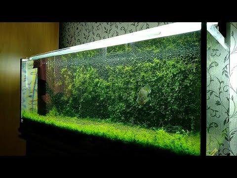Задний фон аквариума из мха/Moss Aquarium Background