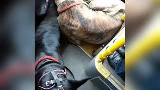 ШОК - СОБАКИ ЗАХВАТИЛИ АВТОБУС!!!! или как надо ездить в автобусе с собакой :)