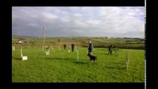 St Just And West Cornwall Dog Training - Agility, Life Skills, Obedience And More