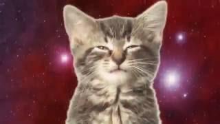 Космос и котята
