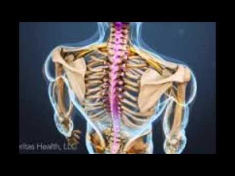 773 curacion cuantica, Bioneuroemocion, vertebras, descodificacion,  cuerpo, mente, consciencia