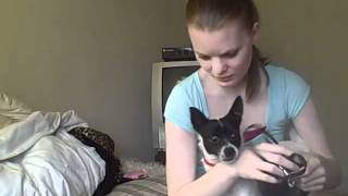 Extra Long Retractable Leash for Dogs Product Review