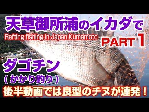 天草御所浦の筏にチヌ黒鯛の年無しクラスが沸いてた真夏のチヌ・黒鯛ダゴチンかかり釣りPart1 | Midsummer raft fishing in Japan Kumamoto1