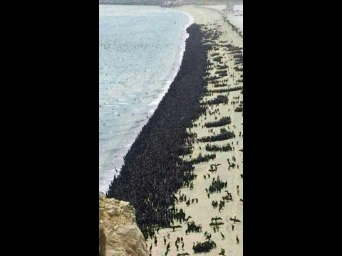 Birds migrated to Ras Al Khaimah Beach  near Dubai.