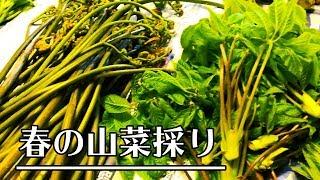 【産地歩き】2018年5月 山菜採りシーズンの初め