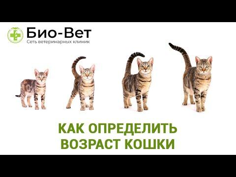 Как узнать сколько коту лет