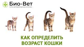 Как определить возраст кошки