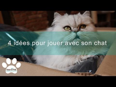 Jeux Des Chats : 4 Idées Pour Jouer Avec Son Chat | Assur O'Poil