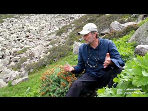 le griffonia simplicifolia