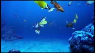 Aqua Digi-Fish HD