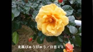 日吉ミミ - 北風ぴゅうぴゅう