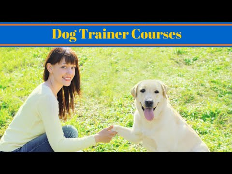 Dog Trainer Courses - How To Become A Dog Trainer - YouTube