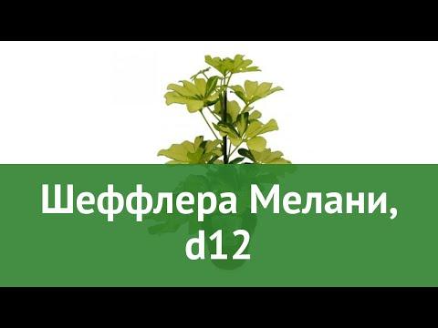 Шеффлера Мелани, d12 обзор ЦКР0110 бренд производитель