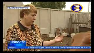 Расстрел лошадей в Ишимбайском районе Башкортостана