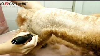Стрижка собаки машинкой Baorun P2