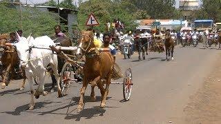 Horse And Bull Race.घोडा बैल गाडीचा शर्यत.Pferd Ochsenkarren Rennen.ЛОШАДИ И БУЛЛЫ.