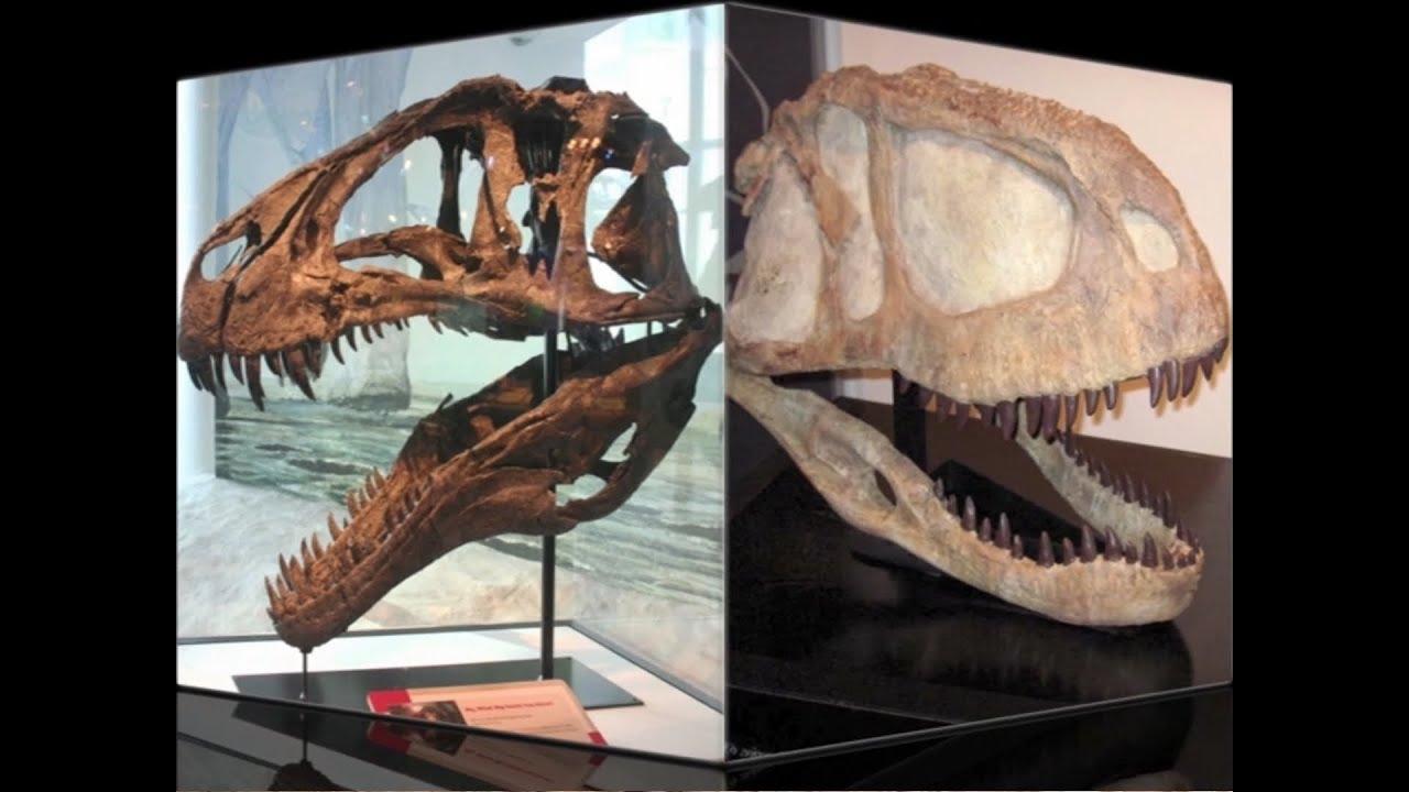Wie ist die Art und Weise, Fossilien zu datieren