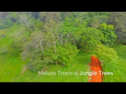Bocas del Toro Panama Waterfront Property for Sale