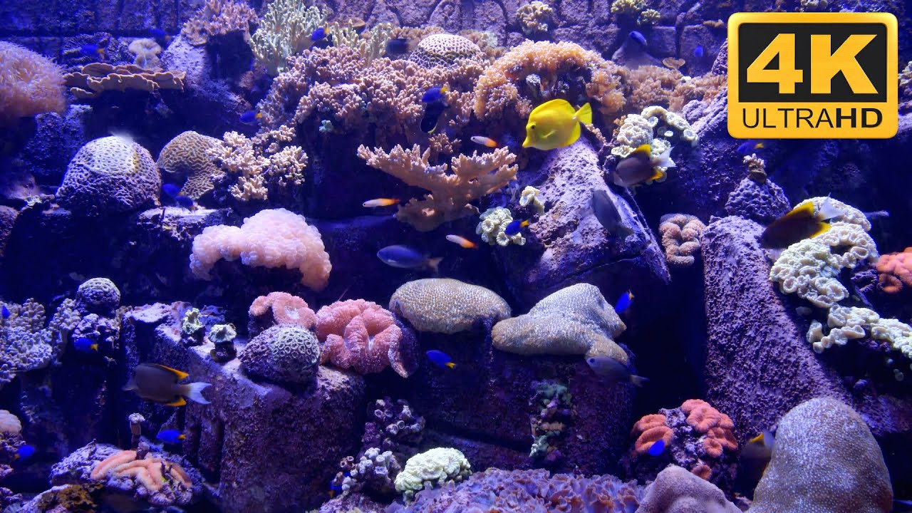 Aquarium screensaver fish tank 1080p hd -  4k Aquarium Screensaver And Tv Wallpaper Youtube