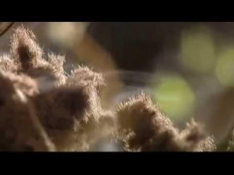 Размножение грибов спорами на расстоянии