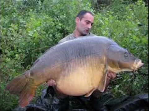 Big Carp fishing WORLD RECORD