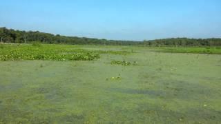Cruisin the bayou