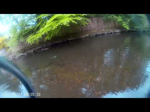 River Esk Fishing 2017