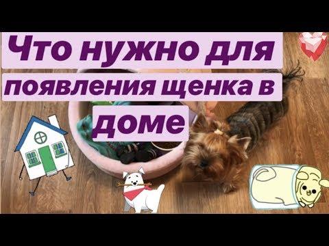 Что нужно для появления щенка в доме #йорк #собаки #щенки